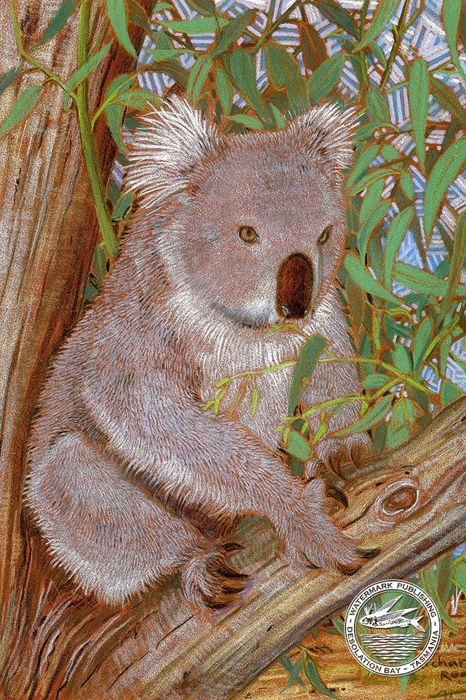 Koala 2 greeting card art room koala 2 greeting card m4hsunfo